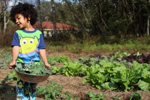 kale-harvest-Nov-2012